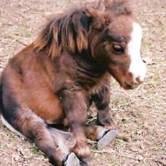 Kleinferd