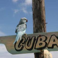 kuba2009