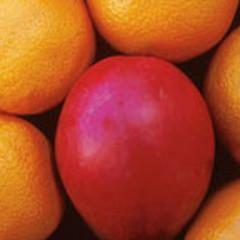 Orangemango