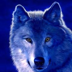 BlueWolf01