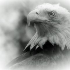 sonicbird