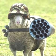 Sheepo1977